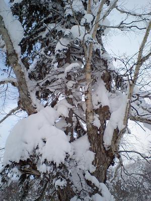 2009.12.25.010.JPG