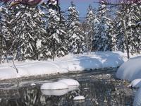 snowshoe (2).jpg